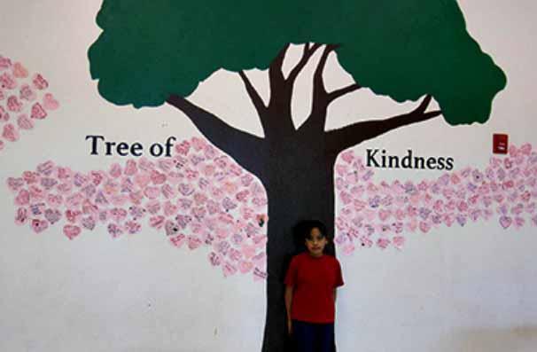 Pasodale tree story